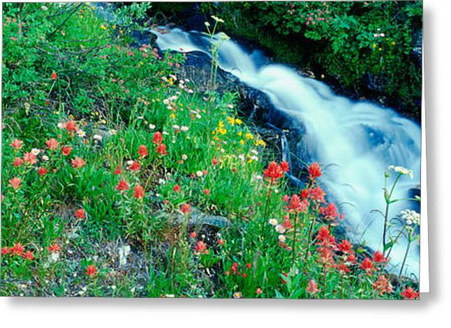 Pond In Park Greeting Cards - Wildflowers Near A Stream, Grand Teton Greeting Card by Panoramic Images