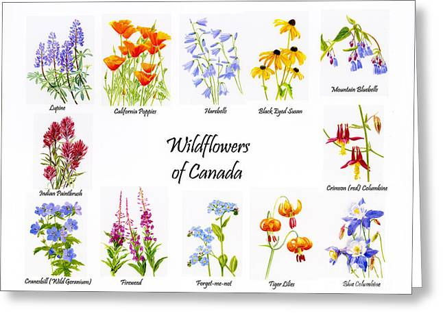 Blue Mountains Red Greeting Cards - Wildflowers of Canada Poster Greeting Card by Sharon Freeman