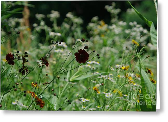 Indiana Flowers Greeting Cards - Wildflowers of Indiana Greeting Card by Kitrina Arbuckle