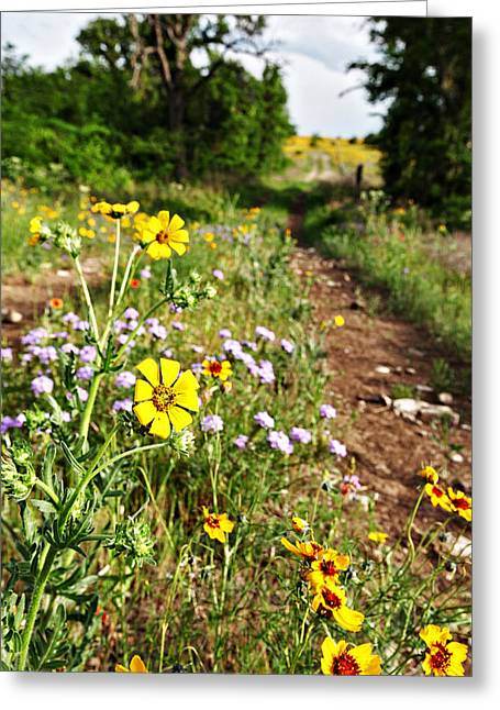 Pastureland Greeting Cards - Wildflowers of Oklahoma Greeting Card by Charrie Shockey