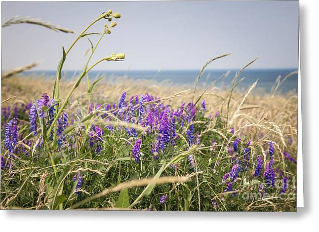 Breezy Greeting Cards - Wildflowers on Prince Edward Island Greeting Card by Elena Elisseeva