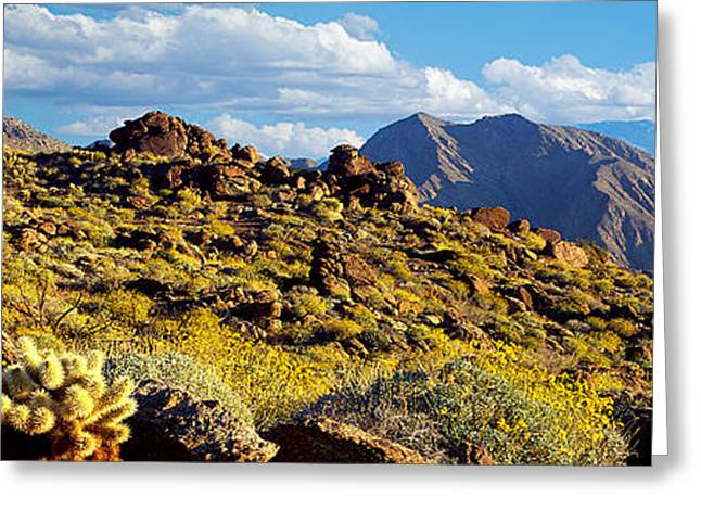Wildflower Photography Greeting Cards - Wildflowers On Rocks, Anza Borrego Greeting Card by Panoramic Images