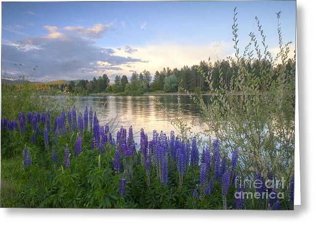 Spokane Greeting Cards - Wildflowers on the River Greeting Card by Idaho Scenic Images Linda Lantzy