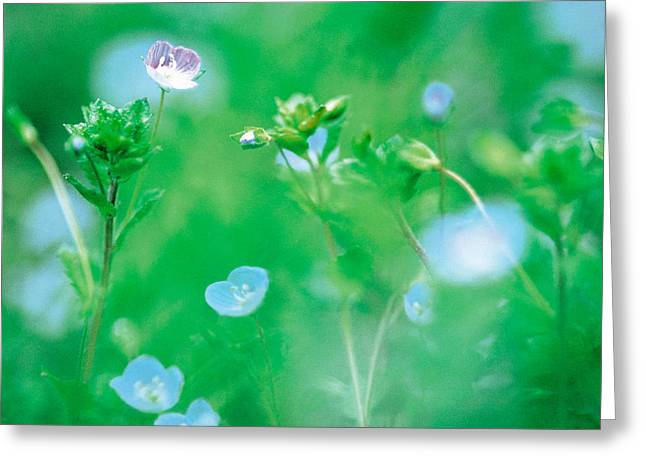 Flora Photography Greeting Cards - Wildflowers Greeting Card by Panoramic Images