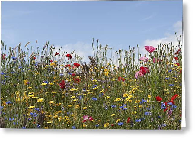 Botanical Greeting Cards - Wildflowers Panoramic Greeting Card by Tim Gainey