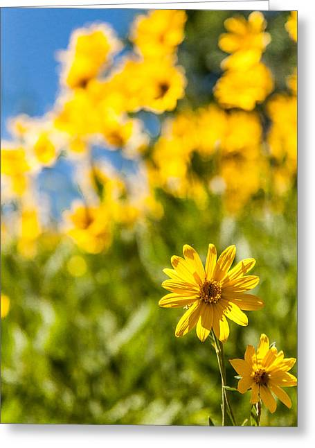 Tetons Greeting Cards - Wildflowers Standing Out Abstract Greeting Card by Chad Dutson