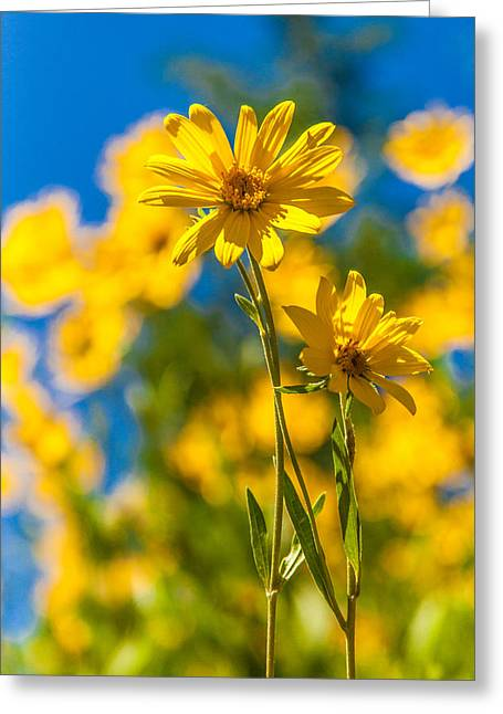 Wyoming Greeting Cards - Wildflowers Standing Out Greeting Card by Chad Dutson