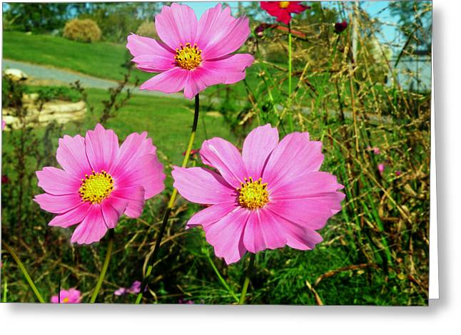 Steven Michael Photography Greeting Cards - Wildflowers Greeting Card by Steven  Michael