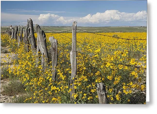 Wildflowers Surround Rustic Barb Wire Greeting Card by David Ponton