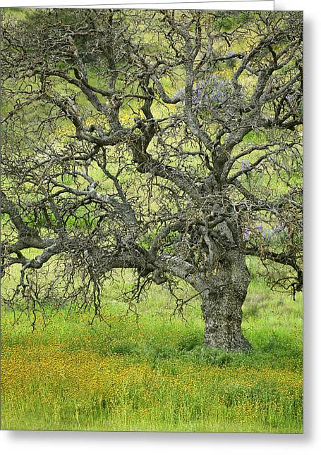 Print On Canvas Greeting Cards - Wildflowers Under Oak Tree - Spring in Central California Greeting Card by Ram Vasudev
