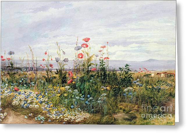 Bright Paintings Greeting Cards - Wildflowers with a View of Dublin Dunleary Greeting Card by A Nicholl