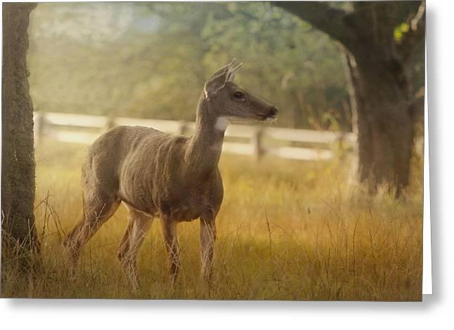 British Portraits Greeting Cards - Wildlife Art - Look To The Horizon Greeting Card by Jordan Blackstone