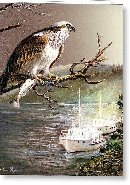 Wildlife Imagery Greeting Cards - Wildlife Ospey Fishing Competition Greeting Card by Gina Femrite