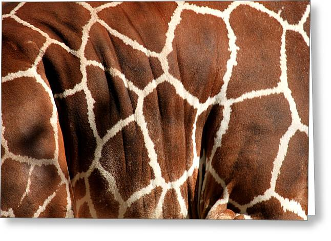 Giraffe Abstract Greeting Cards - Wildlife Patterns  Greeting Card by Aidan Moran