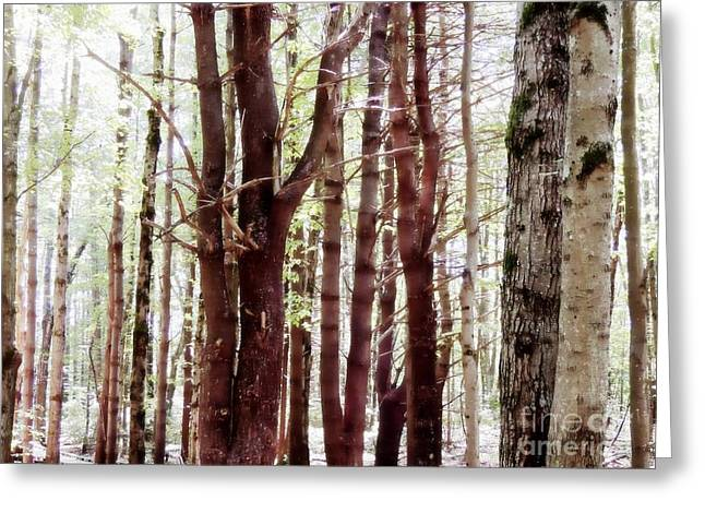 New Hampshire Logging Greeting Cards - Wildlife Refuge Greeting Card by Marcia Lee Jones
