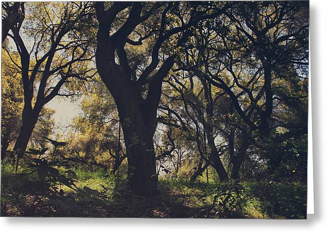 Branch Hill Greeting Cards - Wildly and Desperately My Arms Reached Out to You Greeting Card by Laurie Search