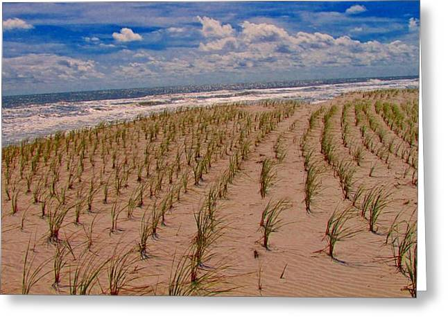 Sandpiper Greeting Cards - Wildwood Beach Breezes  Greeting Card by David Dehner