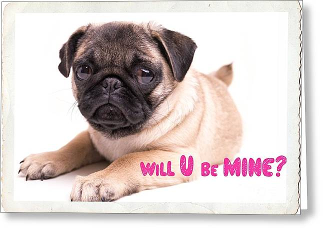 Puppies Photographs Greeting Cards - Will U be mine? Greeting Card by Edward Fielding