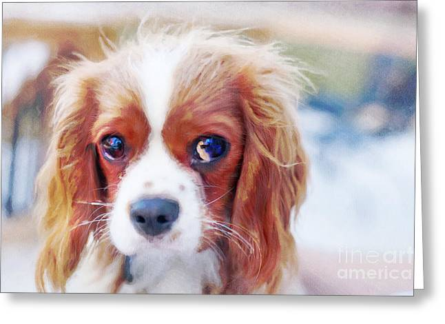 Will You Play With Me Greeting Card by Kay Pickens