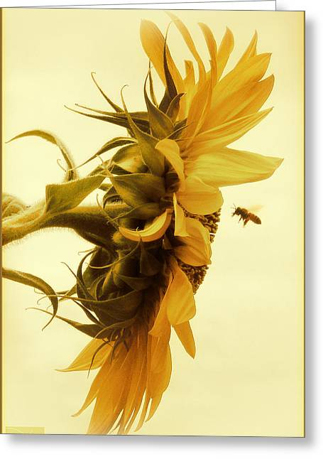 Garden Greeting Cards - Will you still love bee tomorrow Greeting Card by Douglas MooreZart