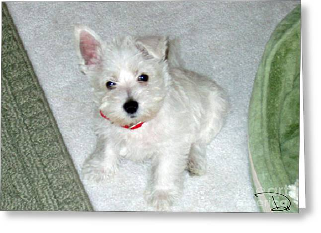 Westie Pup Greeting Cards - Will You Take Me Home? Greeting Card by Dianne Wendell
