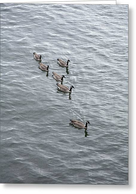 Willamette River Ducks Greeting Card by Peter French