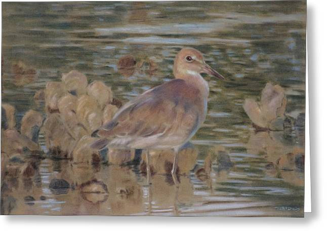 Shorebirds Greeting Cards - Willet Greeting Card by Christopher Reid