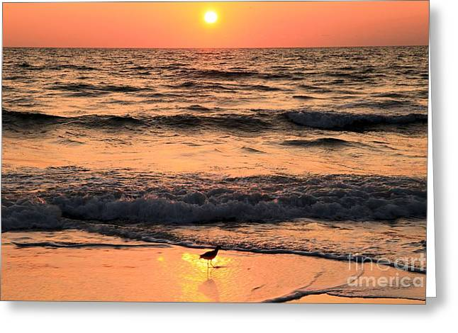 St Joseph Peninsula State Park Greeting Cards - Willet In The Spotlight Greeting Card by Adam Jewell