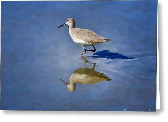 South Padre Island Texas Greeting Cards - Willet Greeting Card by Louise Heusinkveld