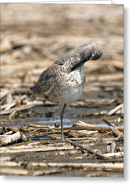 Willet Greeting Card by James Peterson