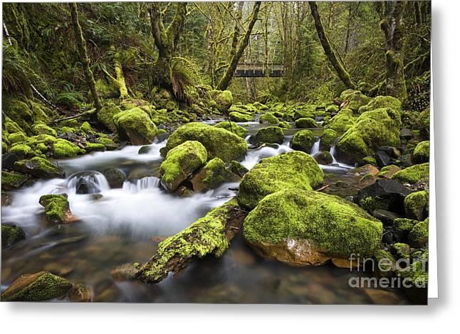 Umpqua River Greeting Cards - Williams Creek Bridge, Or Greeting Card by Sean Bagshaw