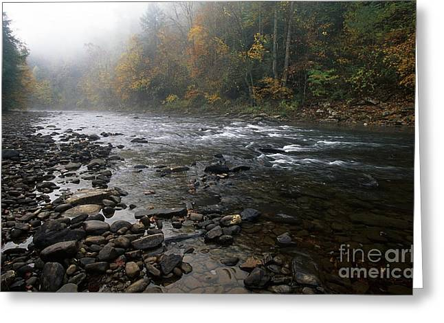 Williams River Autumn Mist Greeting Card by Thomas R Fletcher