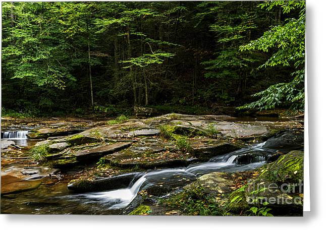 Trout Stream Landscape Greeting Cards - Williams River Headwaters Greeting Card by Thomas R Fletcher
