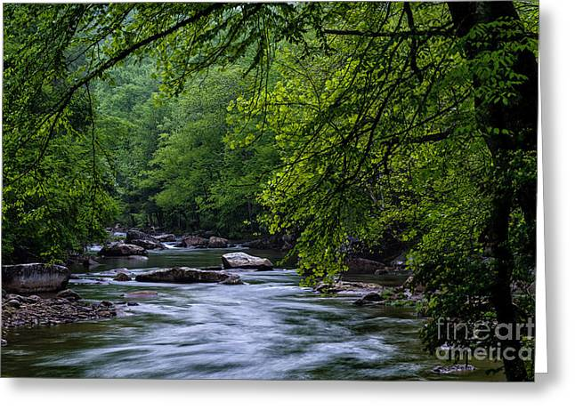 Williams River Greeting Cards - Williams River Scenic Backway Greeting Card by Thomas R Fletcher