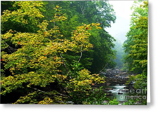 Williams River Summer Fall Color Greeting Card by Thomas R Fletcher