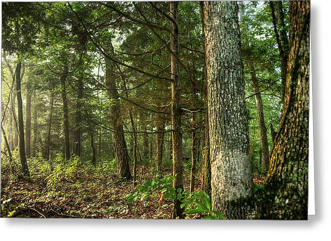 Walnut Tree Photograph Greeting Cards - Williams Woods Greeting Card by William Fields