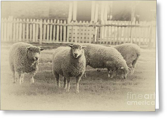 Colonial Style Greeting Cards - Williamsburg Sheep Greeting Card by Terry Rowe