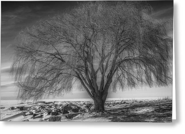 Willow Lake Greeting Cards - Willow at Edgewater Park in Winter Greeting Card by Michael Demagall