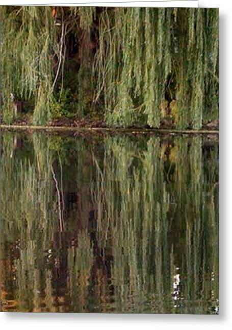 Weeping Greeting Cards - Willow Reflection Greeting Card by Stephanie Forrer-Harbridge