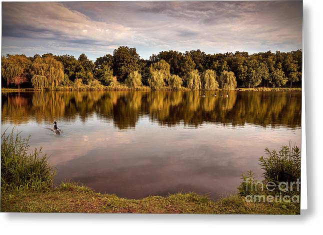 Willow Lake Greeting Cards - Willow Reflections Greeting Card by Brandon Alms