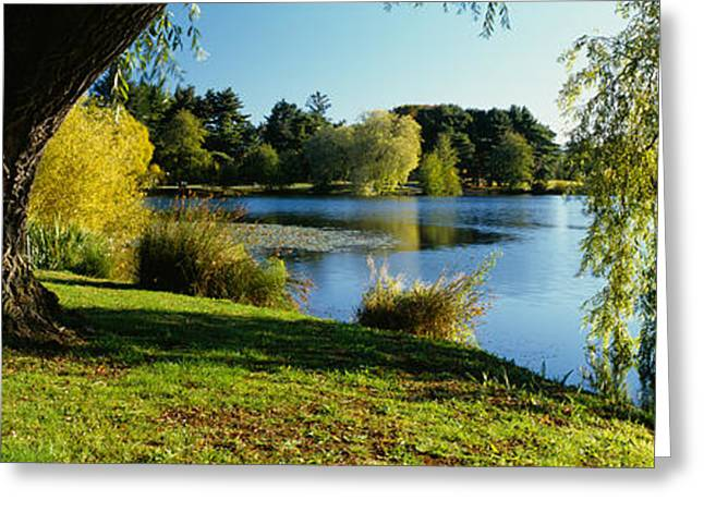 Tree Reflections In Water Greeting Cards - Willow Tree By A Lake, Green Lake Greeting Card by Panoramic Images