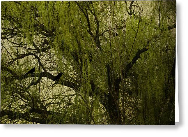 Weeping Photographs Greeting Cards - Willow Tree Greeting Card by Diane Schuster
