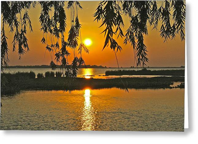Willow Lake Greeting Cards - Willow Tree Sunset Greeting Card by Frozen in Time Fine Art Photography