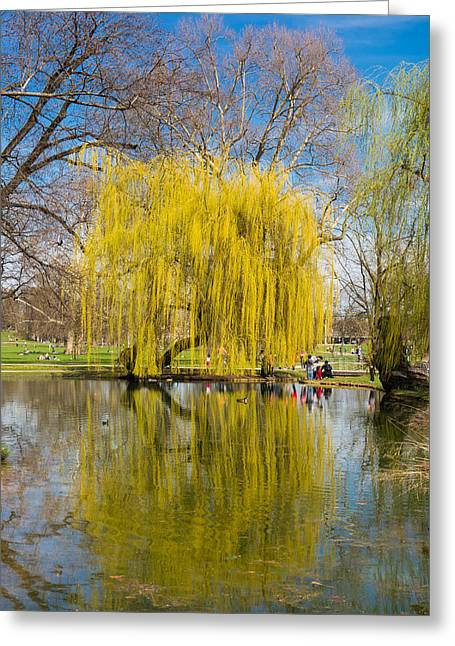 Willow Lake Greeting Cards - Willow tree water reflection Greeting Card by Matthias Hauser