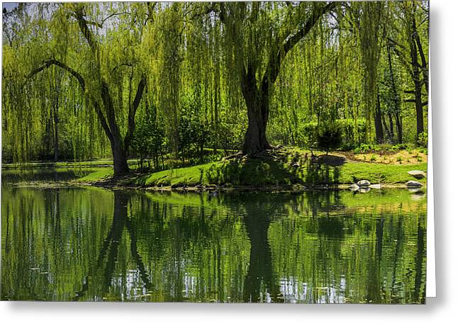 Recently Sold -  - Willow Lake Greeting Cards - Willows weep into their reflection  Greeting Card by LeeAnn McLaneGoetz McLaneGoetzStudioLLCcom