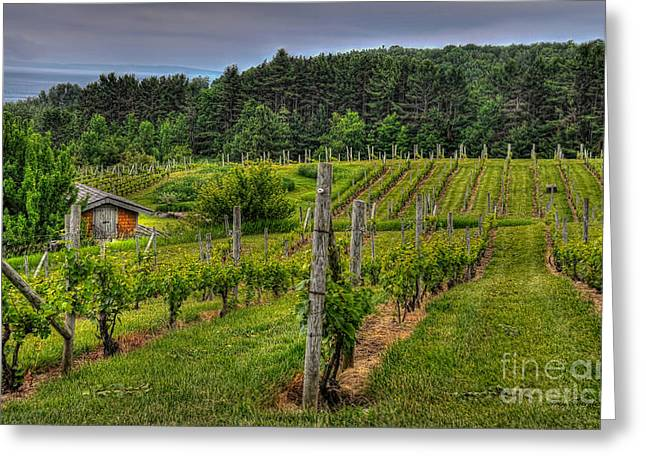 Willows Winery Greeting Card by Trey Foerster