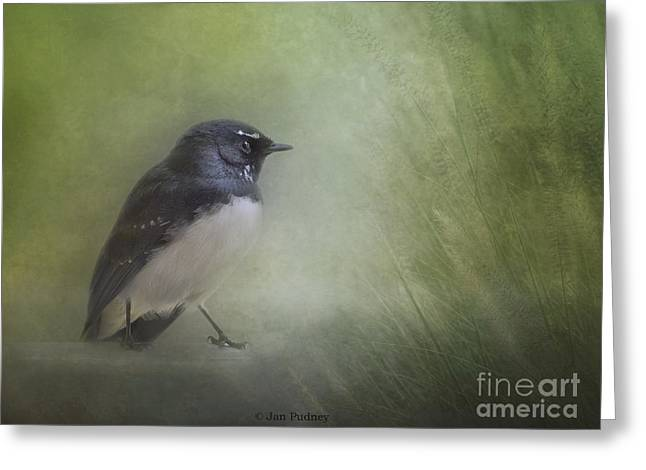 Australian Native Bird Greeting Cards - Willy wagtail Greeting Card by Jan Pudney