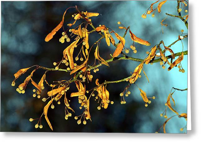 Maturity Greeting Cards - Wilted branch Greeting Card by Toppart Sweden