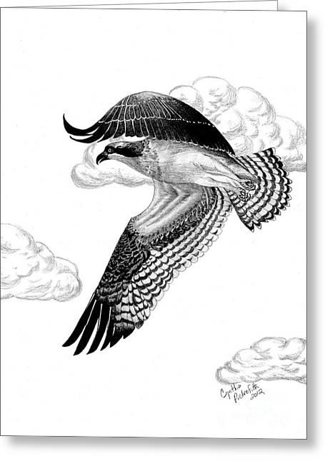 Osprey Drawings Greeting Cards - Wind Beneath My Wings Greeting Card by Jane Pietrofitta