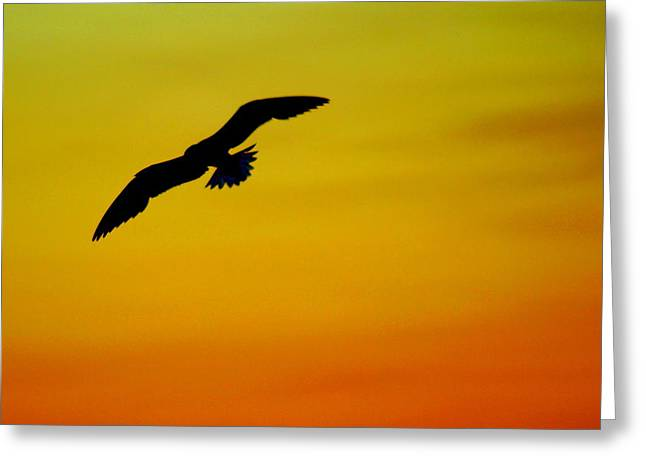 Soaring Falcon Greeting Cards - Wind Beneath My Wings Greeting Card by Frozen in Time Fine Art Photography